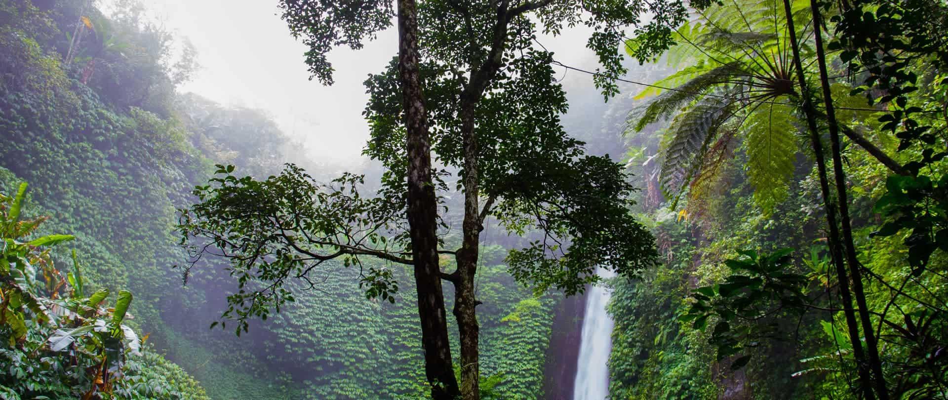Bananacontent – Das neue Alphatier im SEO Plugin Dschungel